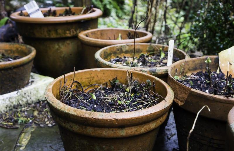 Pots lined up in garden