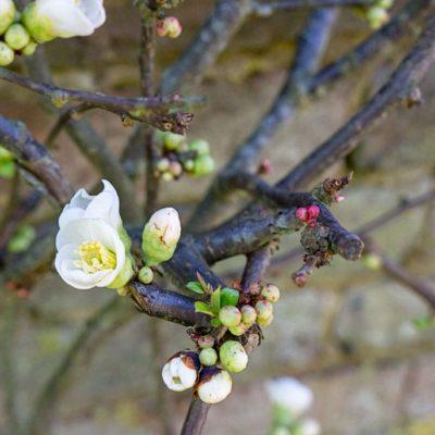 Mishmash March Flowerings