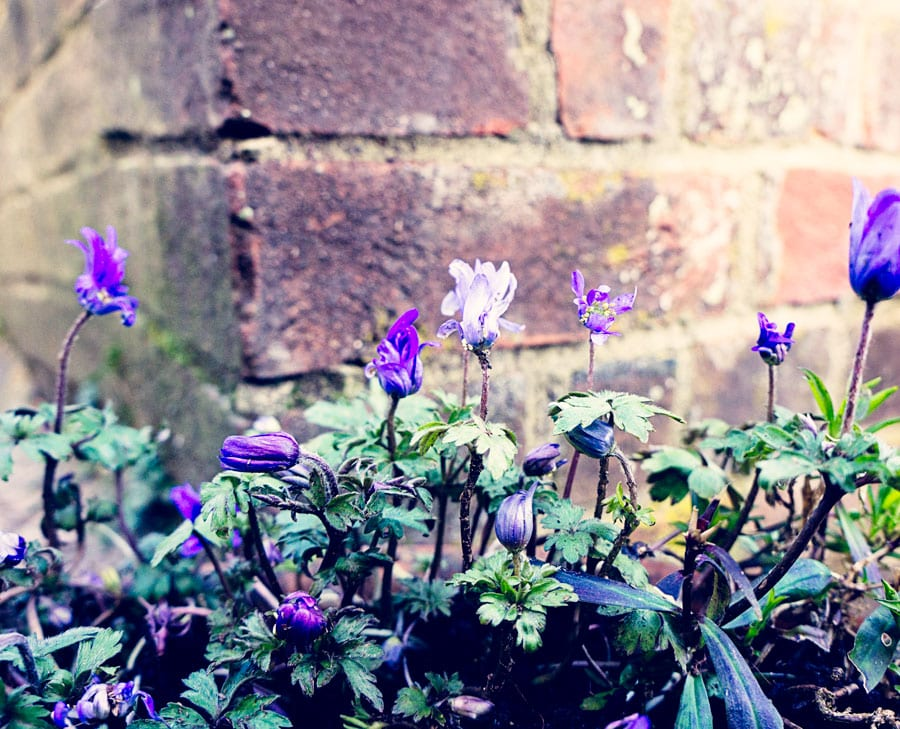 Violets and bricks