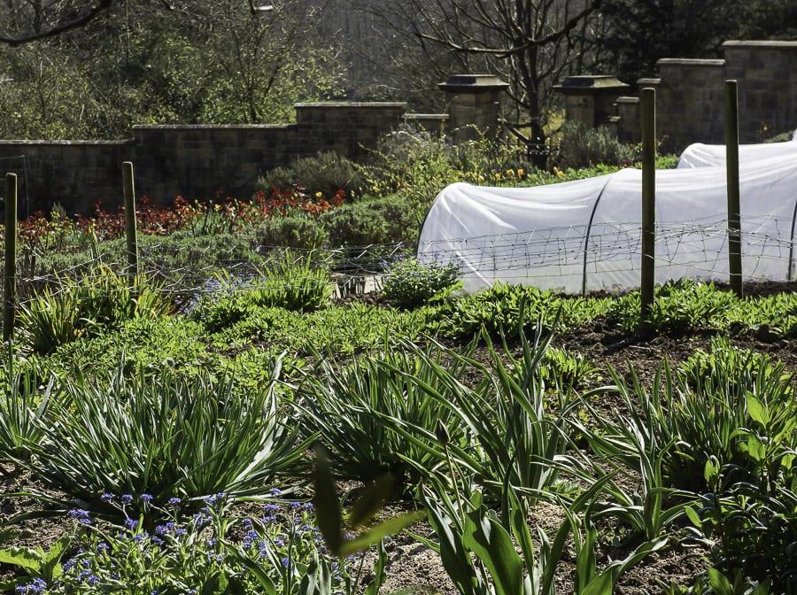 Gravetye Manor kitchen garden plants