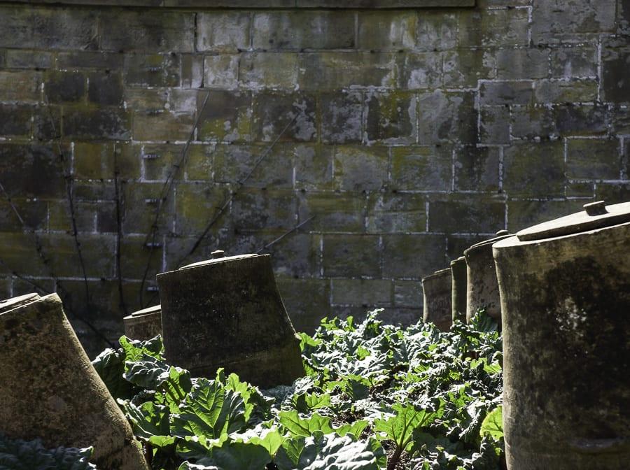 Gravetye Manor rhubarb pots