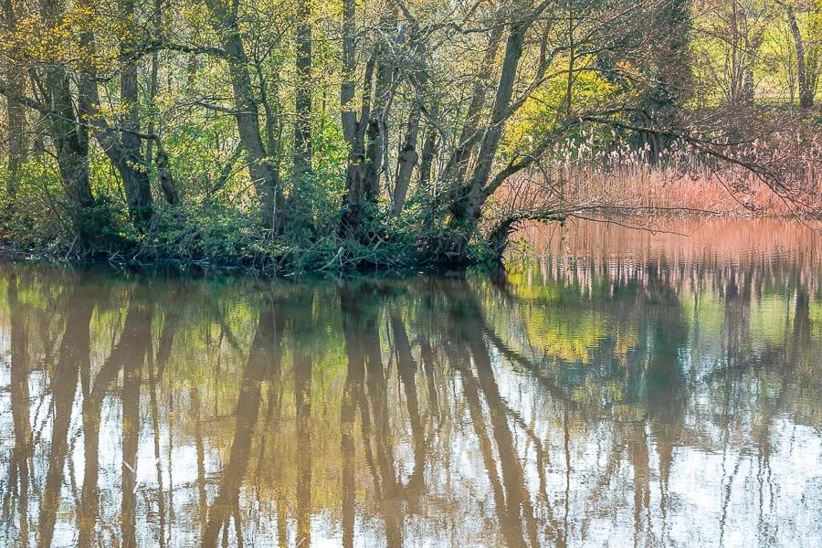 Nature benefits children lake reflection