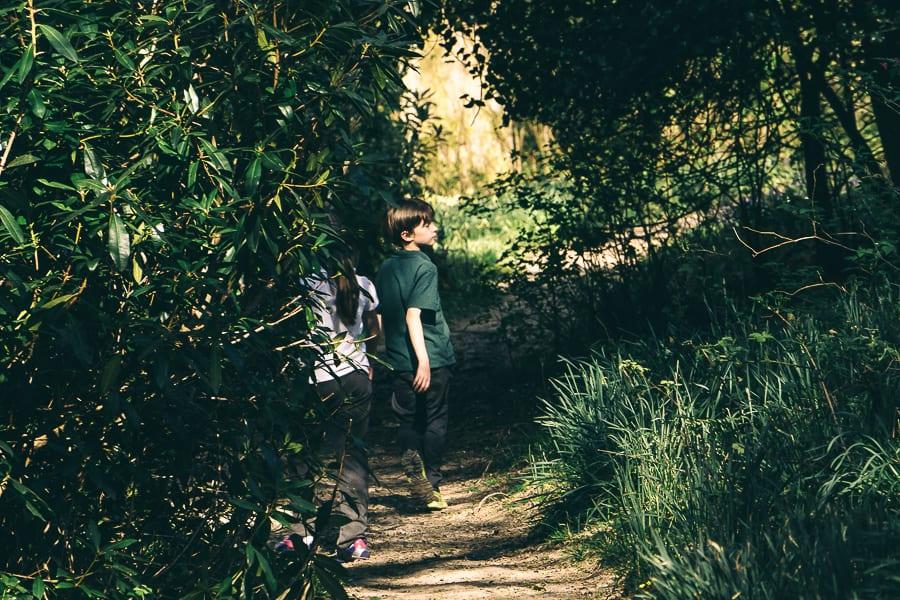 Nature benefits children wood path