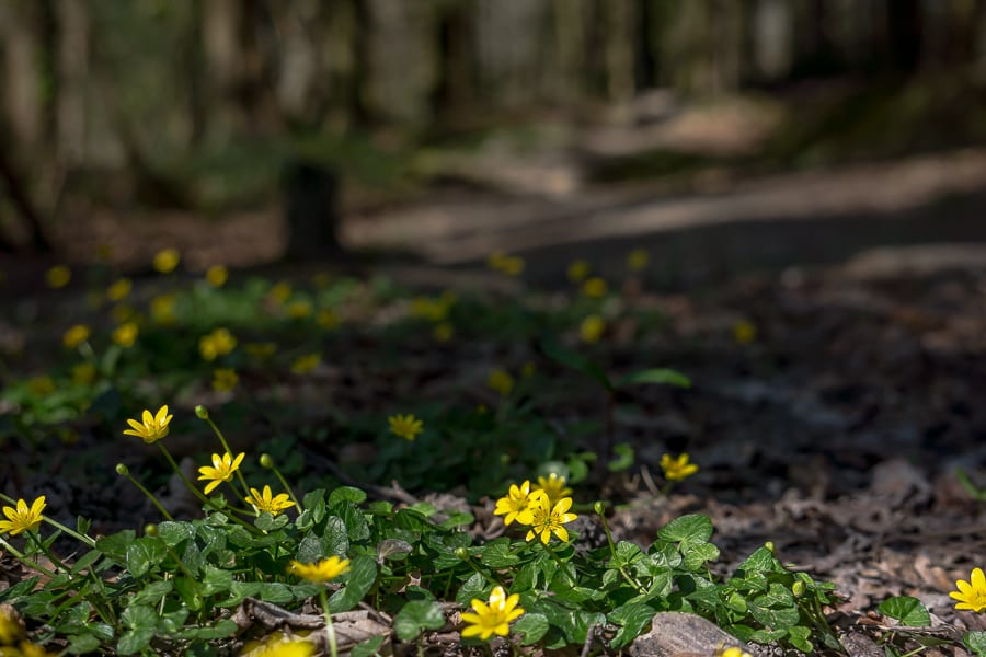Nature benefits children woods and flowers