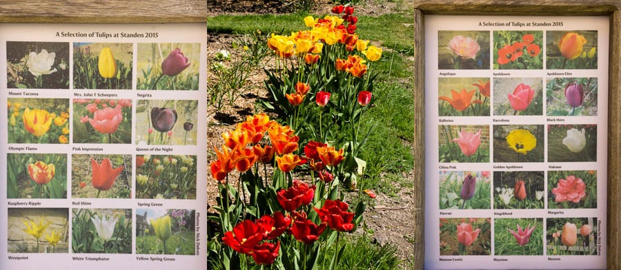 Selection of tulips at Standen House