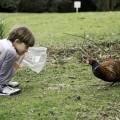 Goodbye Fred the Pheasant