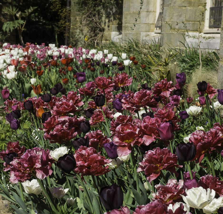 Tulip festival at Standen