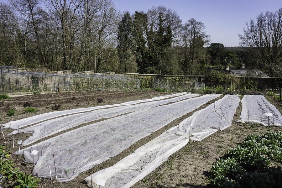 vegetable patch Gravetye Manor