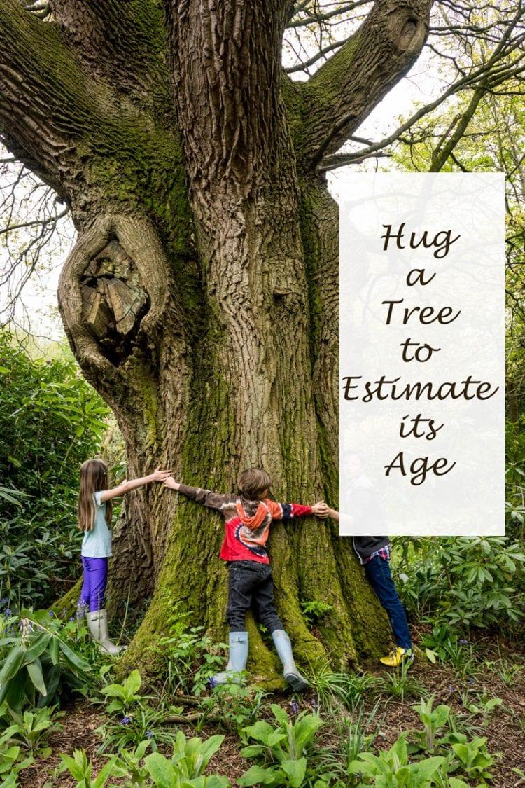 Hug a tree to estimate its age