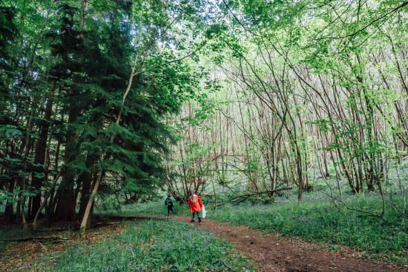 Kids on nature treasure hunt in woods