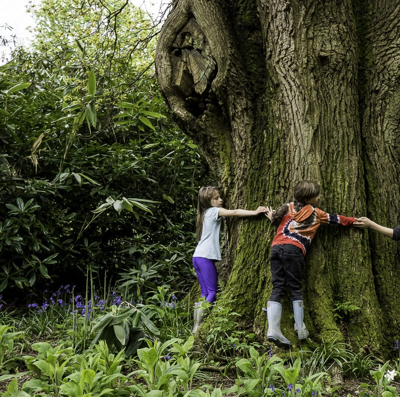 Luce and Theo hugging ancient oak
