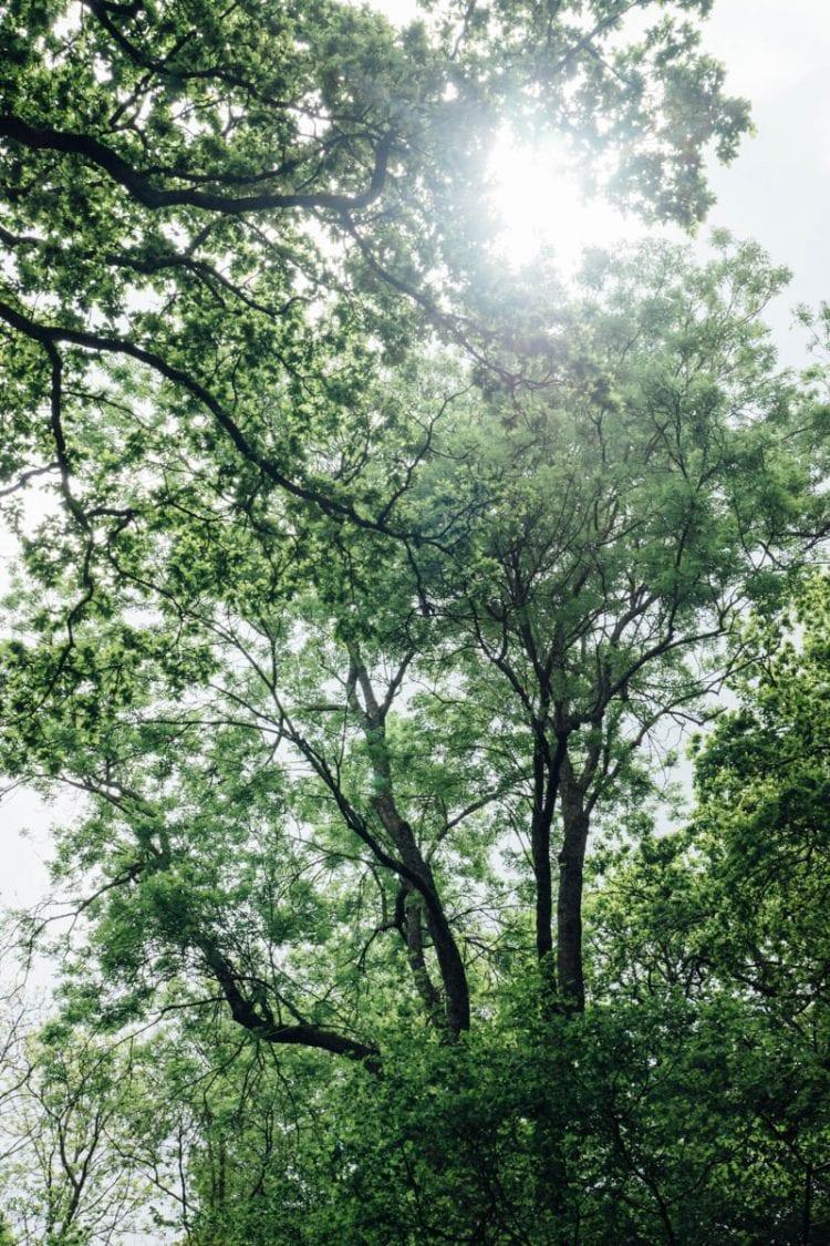 Wakehurst Pearcelands Wood