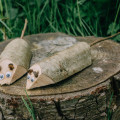 Wood dormice on log