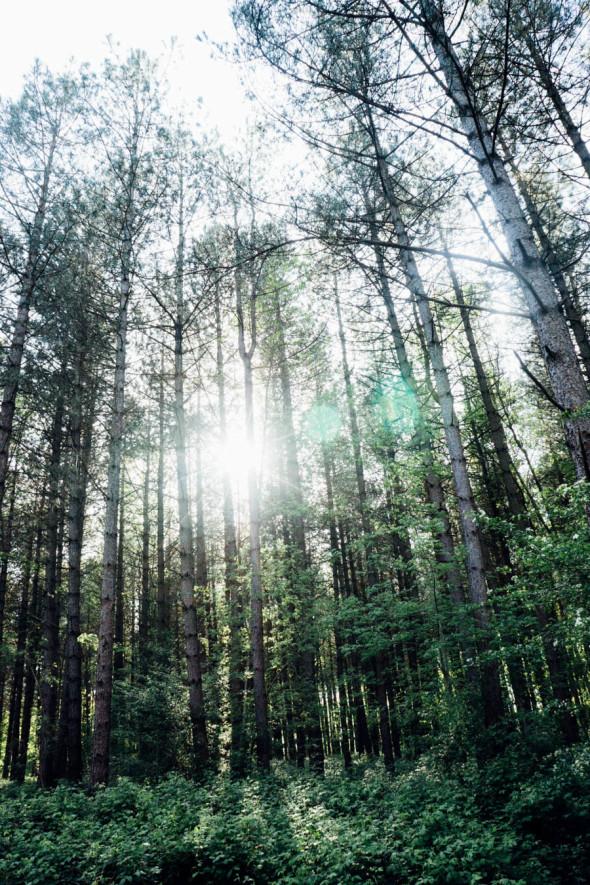 Woodlands scavenger hunt light through trees