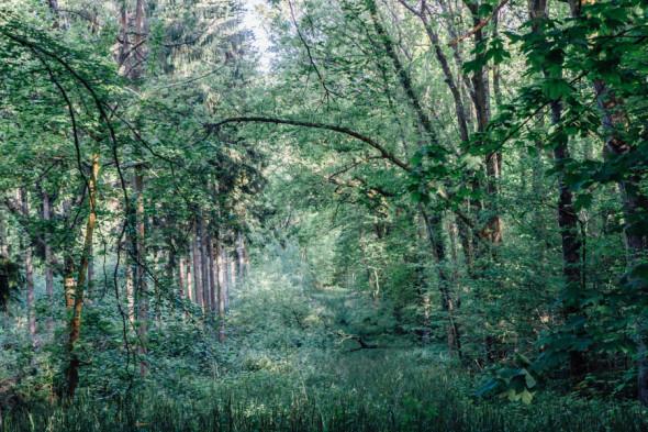 Woodlands scavenger hunt overgrown path