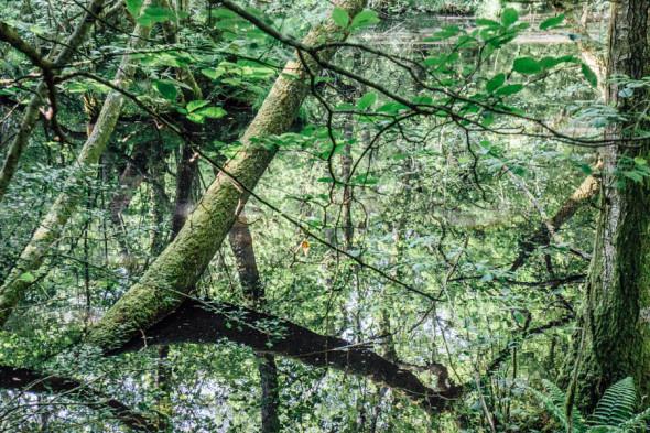 Woodlands scavenger hunt pond reflections