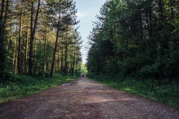 Woodlands scavenger hunt wood path