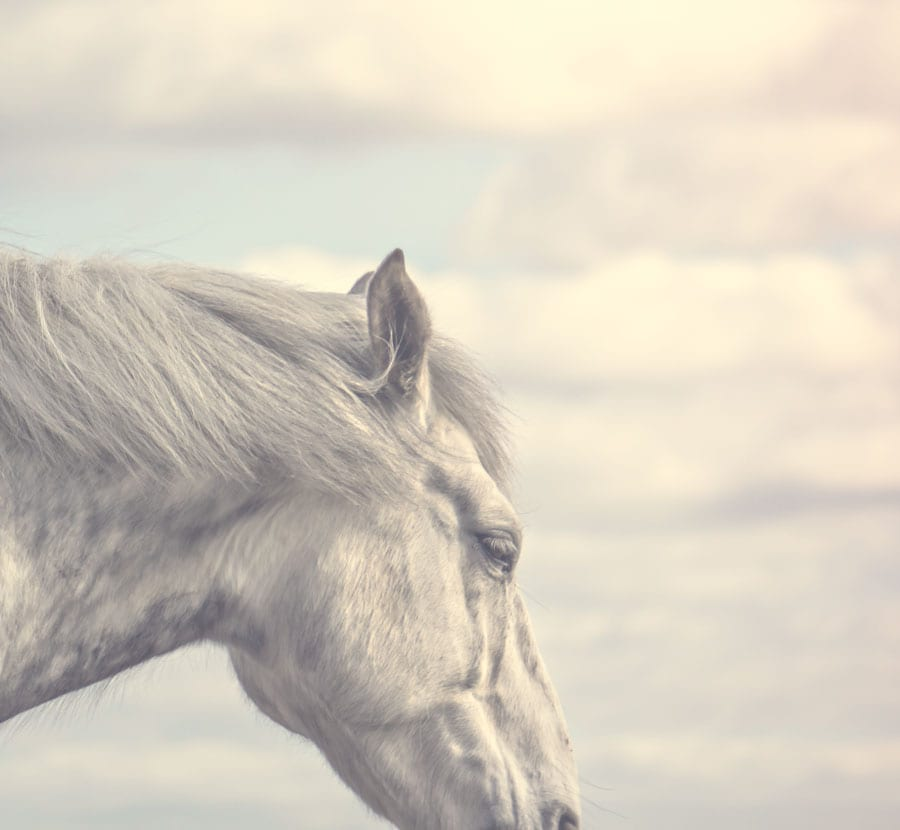 Dreaming horse and sky