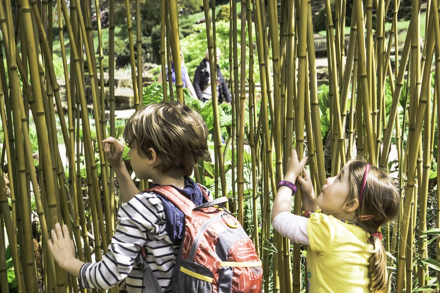 Theo and Pod fascinated by bamboo