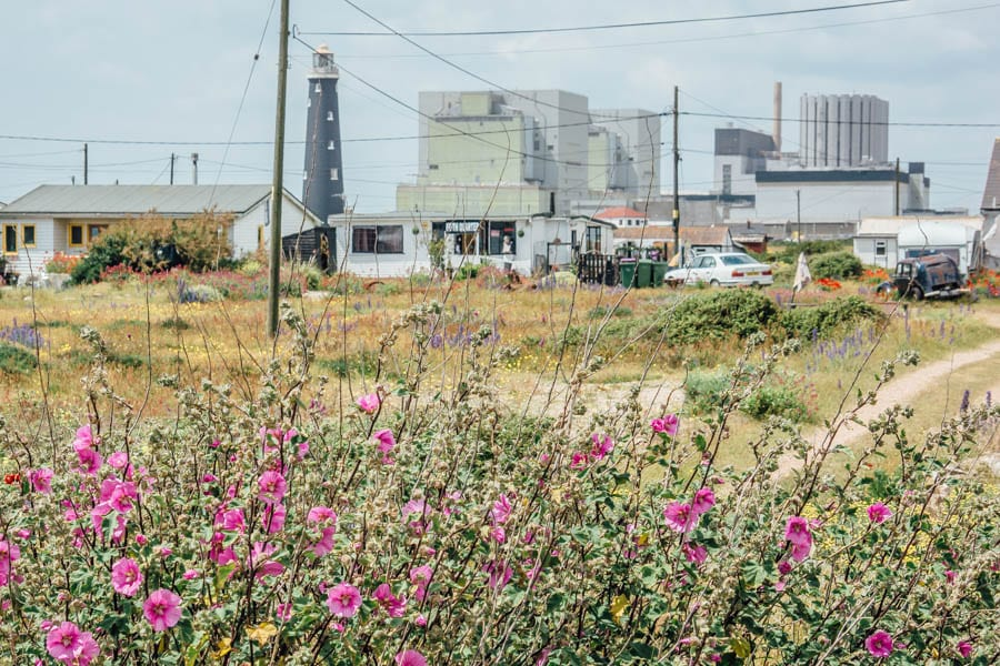 Dungeness flowers and buildings