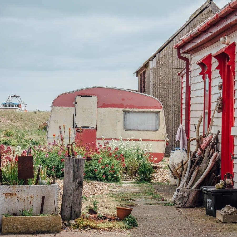 Dungeness flowers and cottage garden