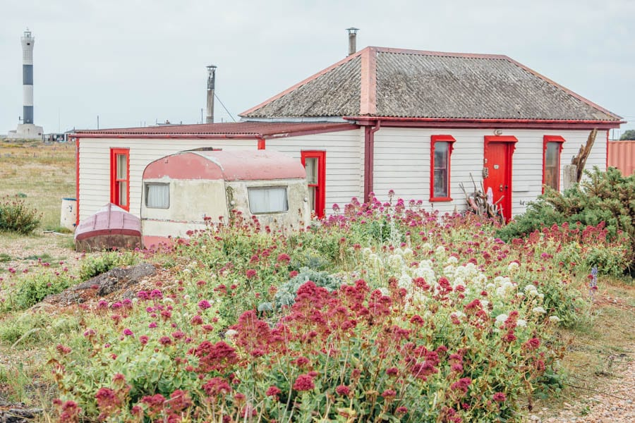 Dungeness flowers and red white cottage