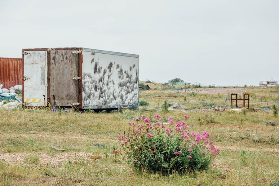 Dungeness flowers red valerian and shipping container