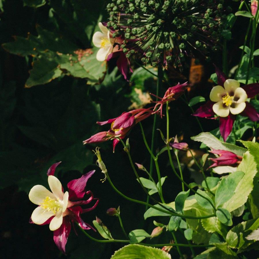Gravetye Manor burgundy and yellow flowers