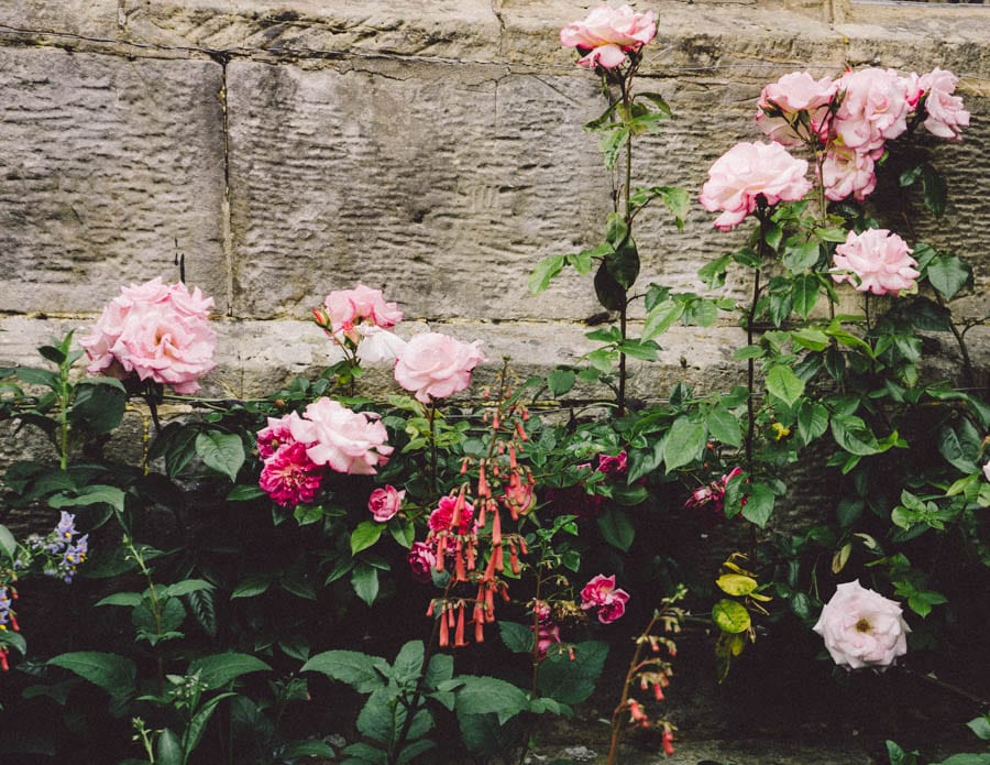 Gravetye Manor flowers by wall