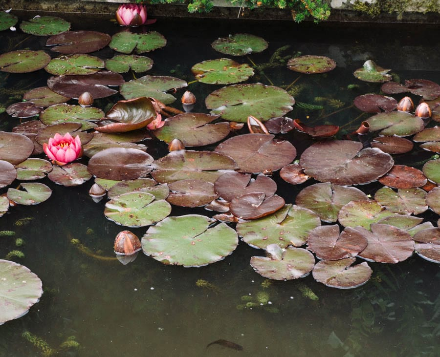 Gravetye Manor water lily and fishpond