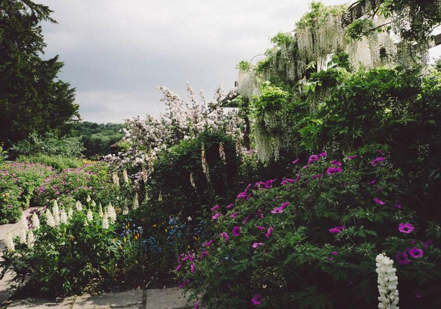 Gravetye Manor white wisteria and flowerbed