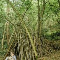 Kids Den building in woods