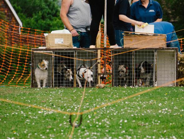 Pet dog race kennels at village fair
