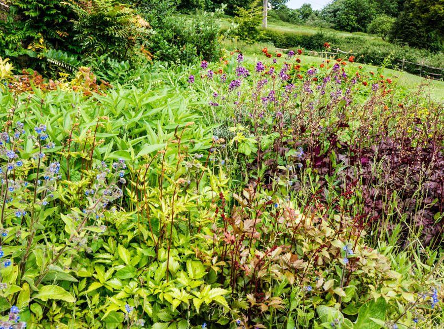 Side flowerbed in my garden