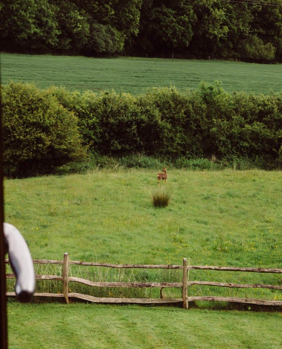 Window view of deer, meadow, garden and field