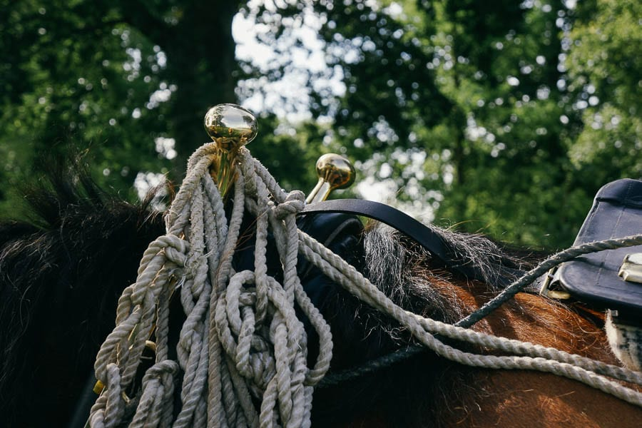 Harness on carriage working horse