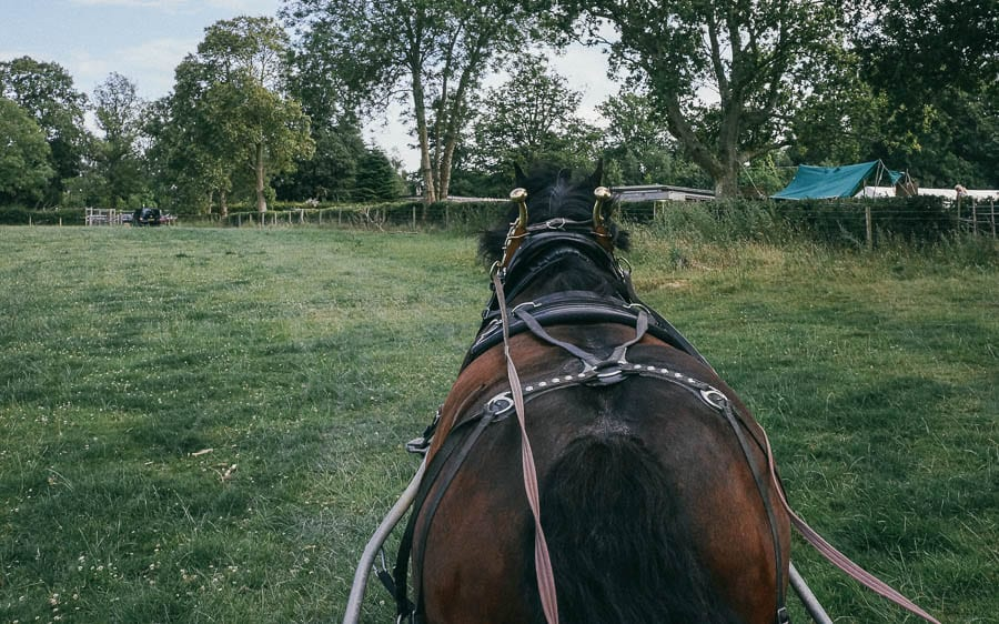 Carriage ride with Ardennes working horse