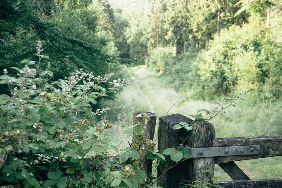 Gate to woodpath with brambles