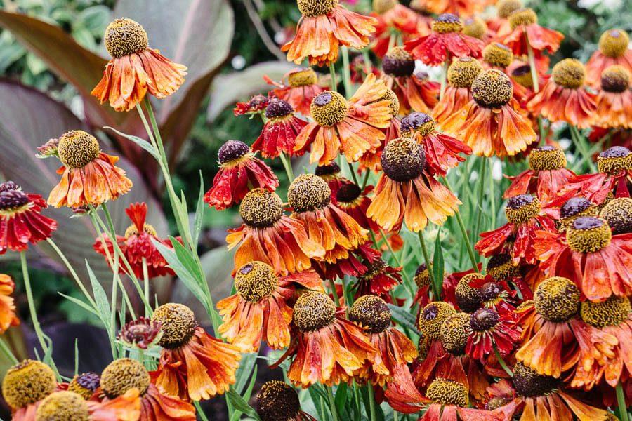 Orange red flowers  Gravetye Manor