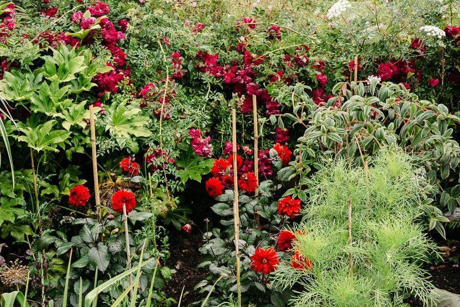 Red flowers and bamboo sticks Gravetye Manor