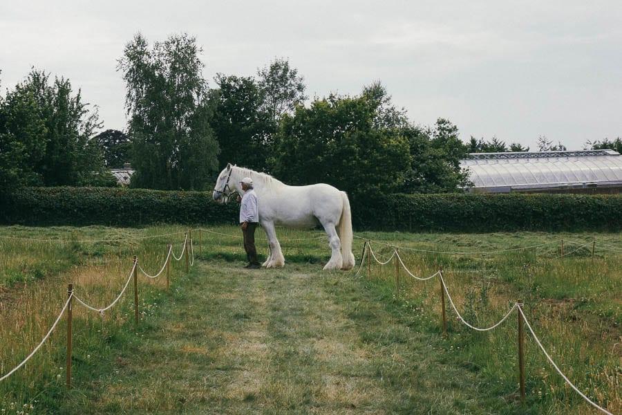 Shire horse at Wakehurst Place