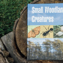 How to identify insects, snails and butterflies in the woods