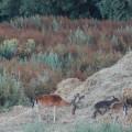 deer family in field