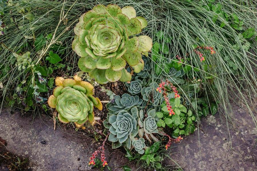 Succulents and sedum Gravetye Manor