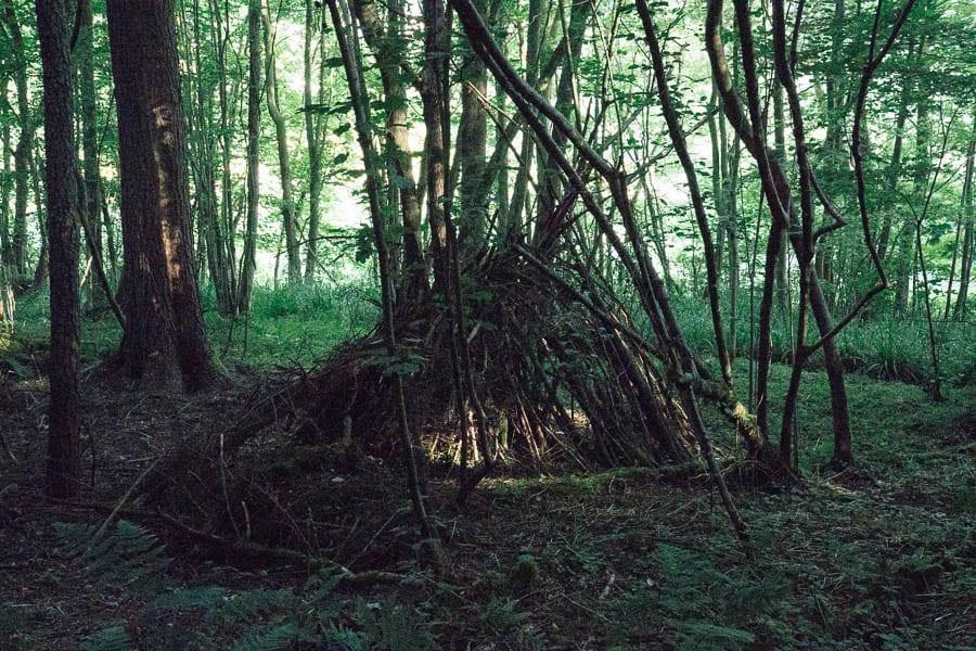 den in woods