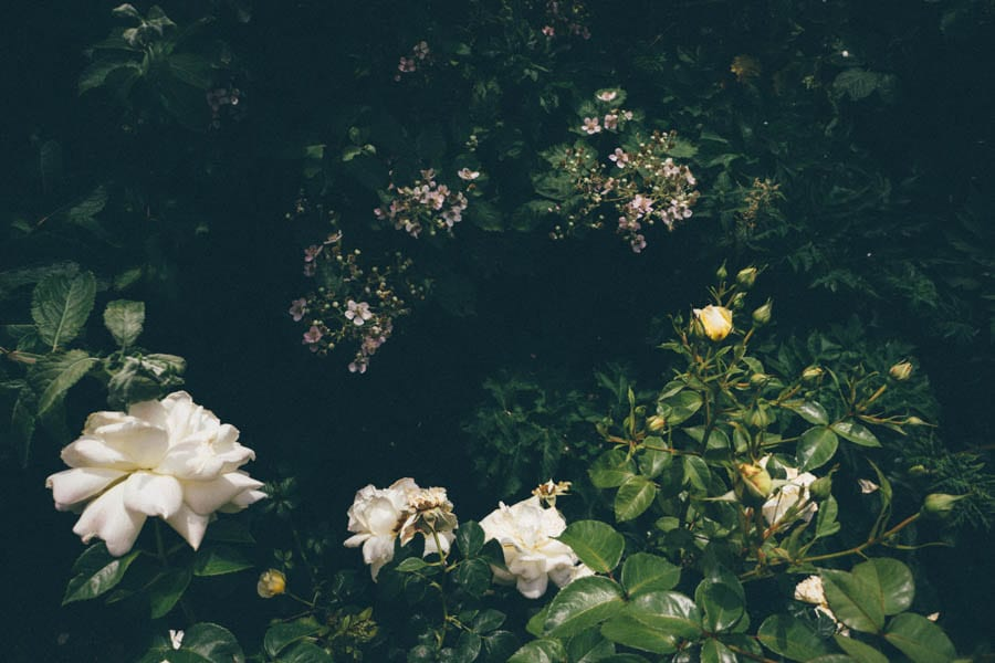 roses and bramble flowers