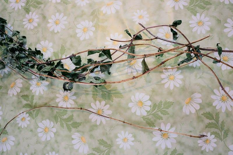 Honeysuckle twigs on table cloth