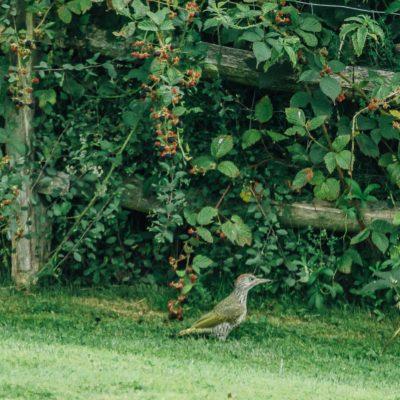 The Rainbird