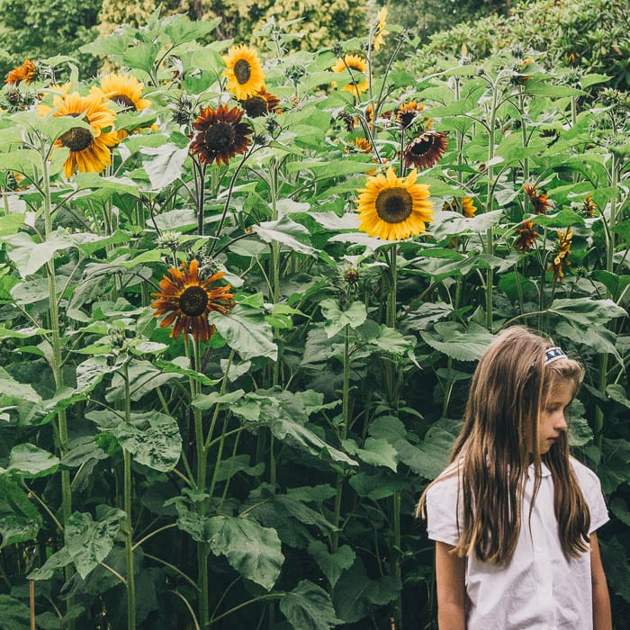 Luce next to sunflowers