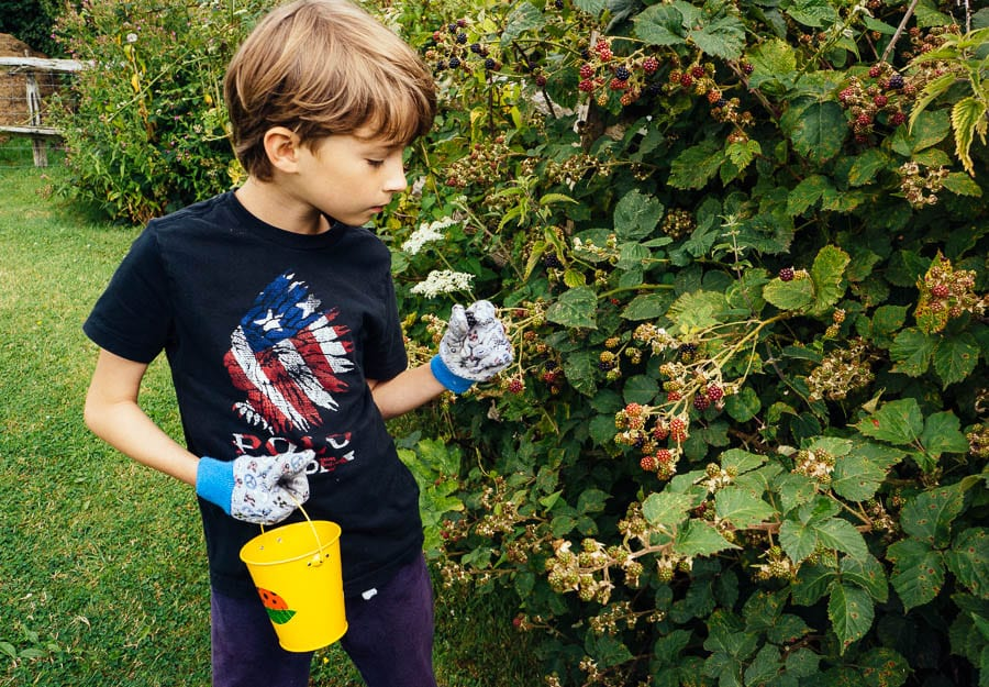 Theo collecting blackberries